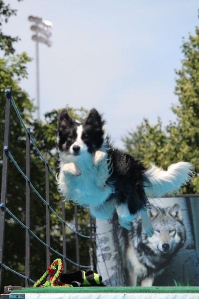 2015.8.6 Winnebago County Fair Dock Dogs (17).JPG
