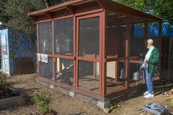 CSG Chickens Have New Home 11/10/12