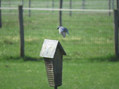 Bluebird flight 3