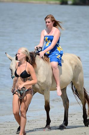 Beach Horses™ 8-11-12
