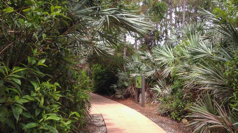 Helene Klein Pineland Preserve