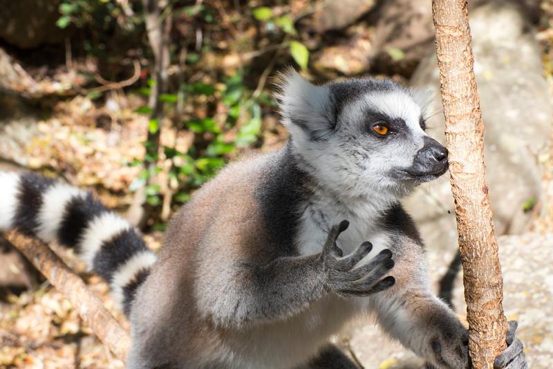 Madagascar_2013_IG3A3305.jpg