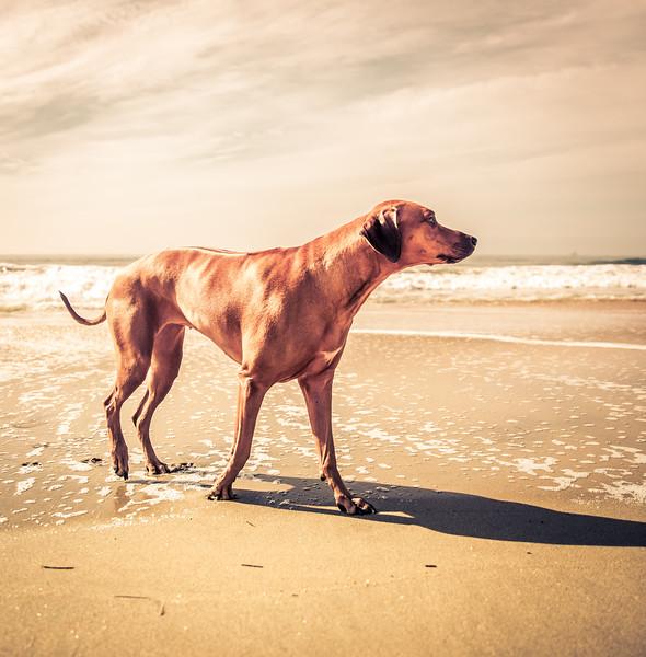 zimba-dog-beach-5253.jpg