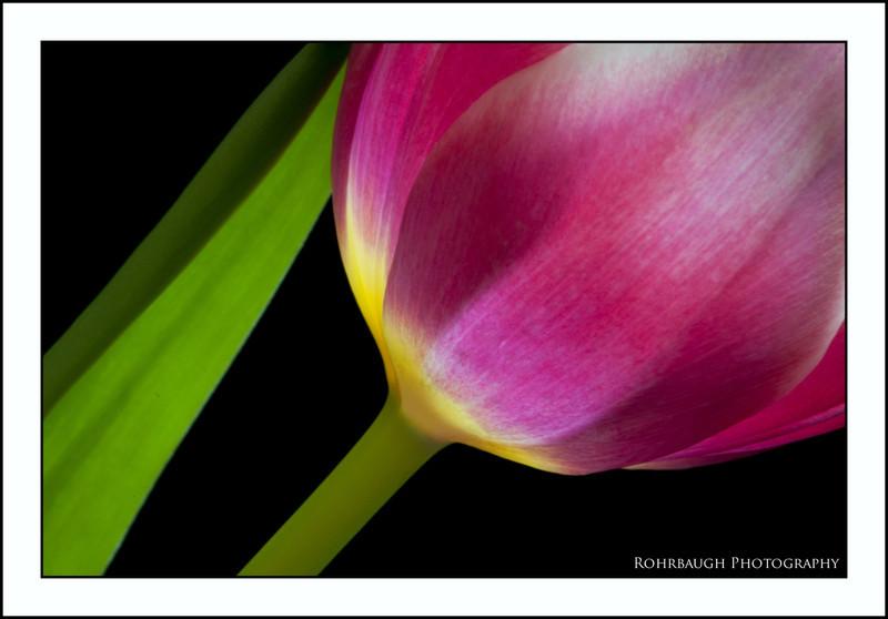 Rohrbaugh Photography Flowers 41.jpg