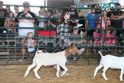 Goat Show 2015
