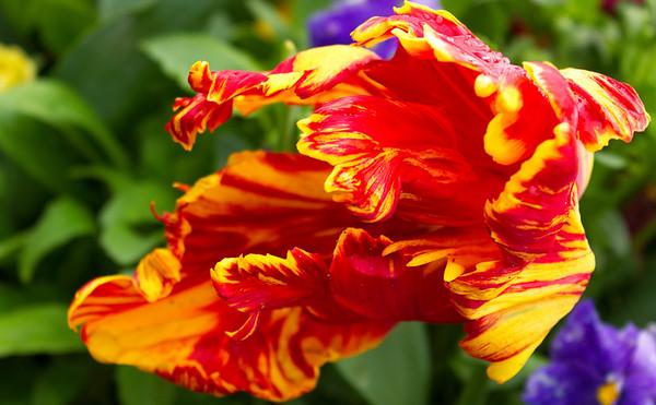 Floriade Flower Show