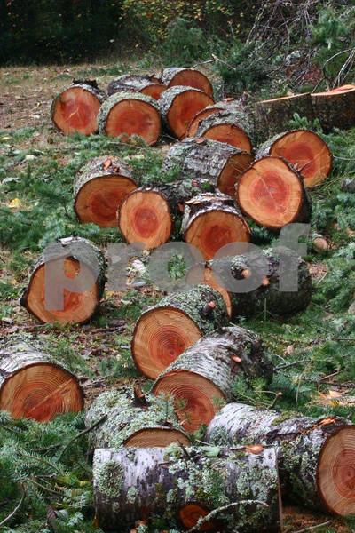Firewood 6342.jpg