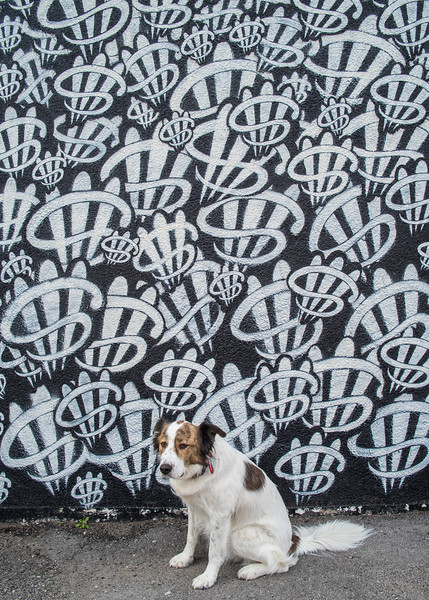 Dog and mural