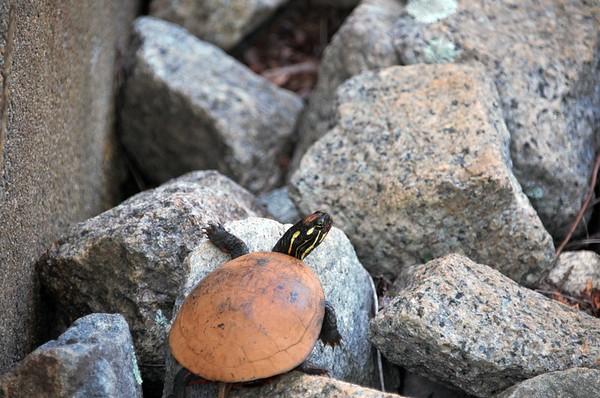 Wildlife at Elm Street Dam Site