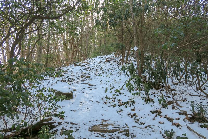 Green Knob Trail -- 3,320'
