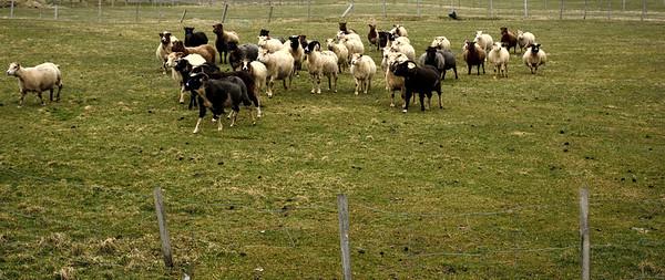 6. áfangi: Grindavík - Gunnuhver