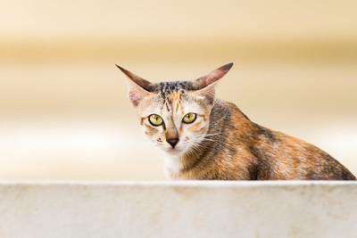 Cats of Phnom Penh