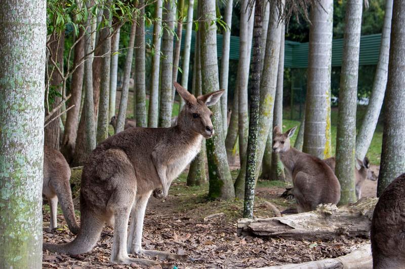 Australia_191.jpg