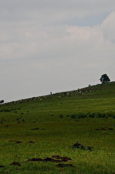 Kenya.Card3.02.2014 483