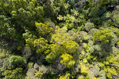 50_190920_waitakere_kauri_forest_misc