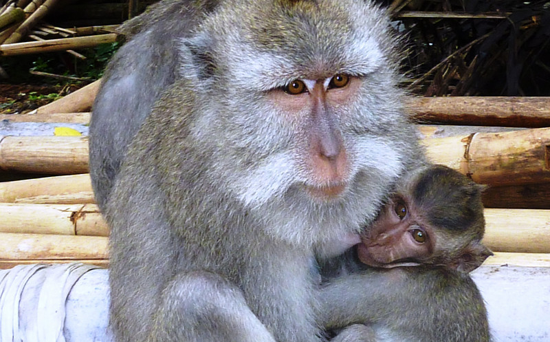 These monkeys may look cuddly