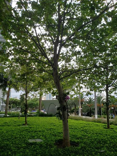 greenery and trees around Sao Paulo
