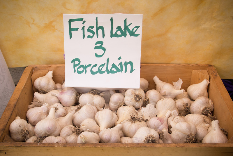 garlic porcelain.jpg