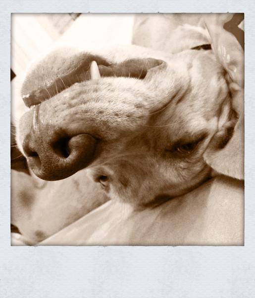 murphydog (iPhoneography)