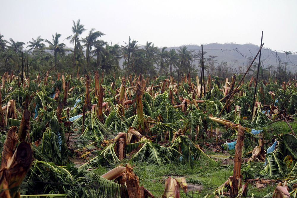 Description of . Banana trees destroyed by Typhoon Bopha are seen at a plantation in Compostela town, Compostela Valley province, in southern island of Mindanao on December 4, 2012. Typhoon Bopha killed 43 people in one hard-hit Philippine town December 4, local television station ABS-CBN reported from the scene.  KARLOS MANLUPIG/AFP/Getty Images