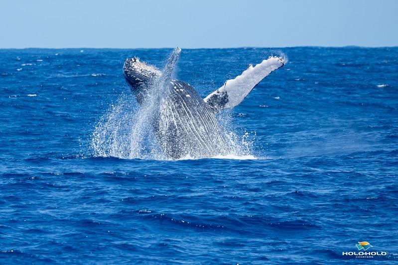 whales-leila-65.jpg
