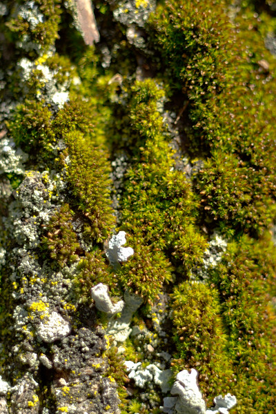 Moss on the Tree 10