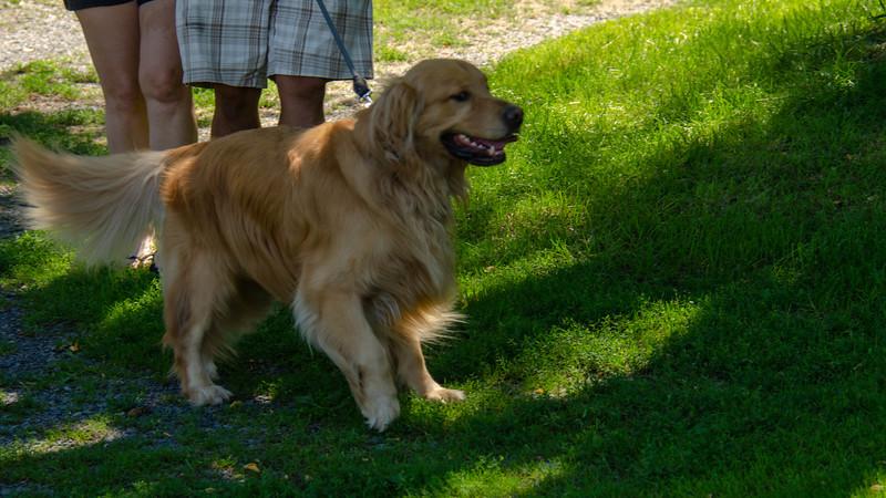 PuppyParty18-105.jpg