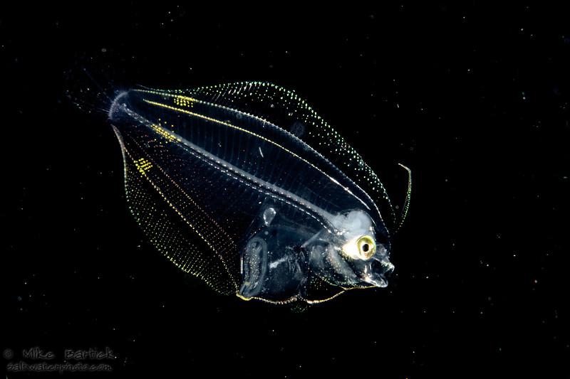 blackwater flounder (1 of 1) 2.jpg