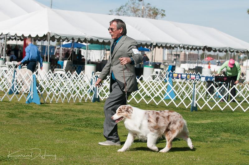 20170205_Australian Shepherds_Lost Dutchman Kennel Club-193.jpg