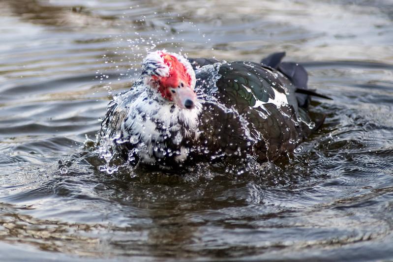 naples-birds-12-2017-031.jpg