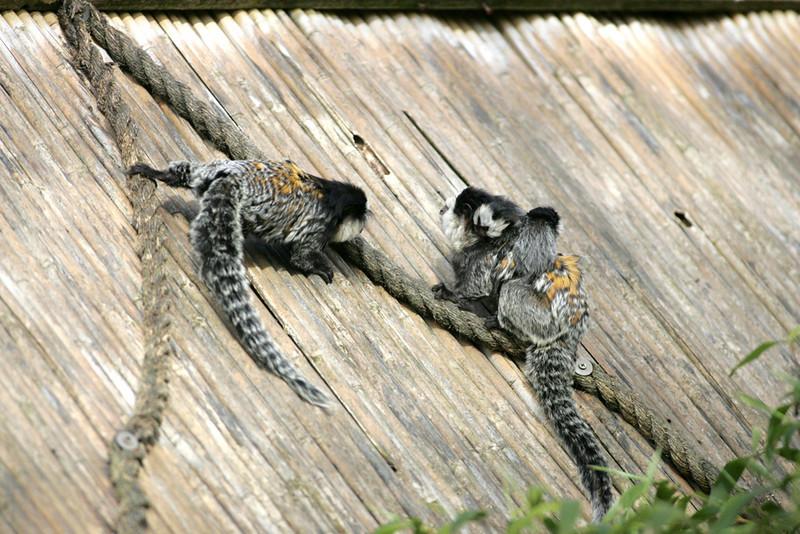Newquay Zoo 076.jpg