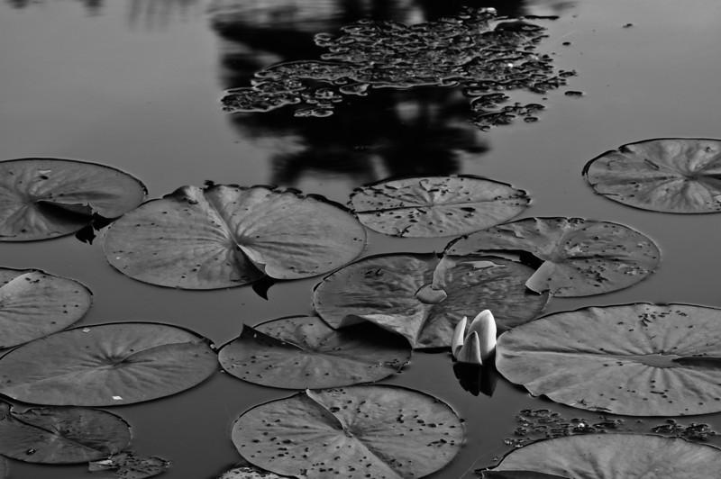 20100613_beyers_pond_065.jpg