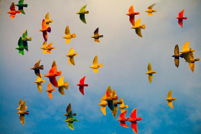 Painted Birds (Released for weddings, birthdays,etc.)