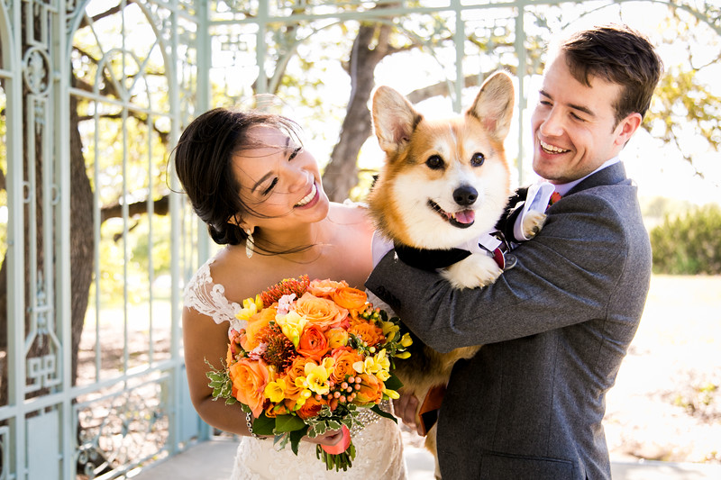Dog-Wedding-Photos-009.jpg