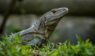 Costa Rica ... Life amid the rainforest.