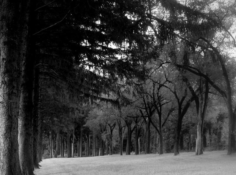 trees on oblong.jpg