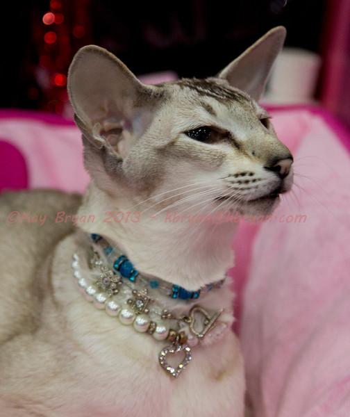 CatShow2014044.JPG
