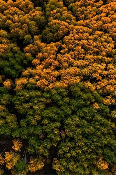 Washington Gulch - Crested Butte