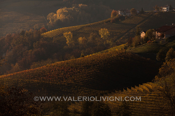 Vineyard Landscape of Piedmont: Langhe-Roero and Monferrato