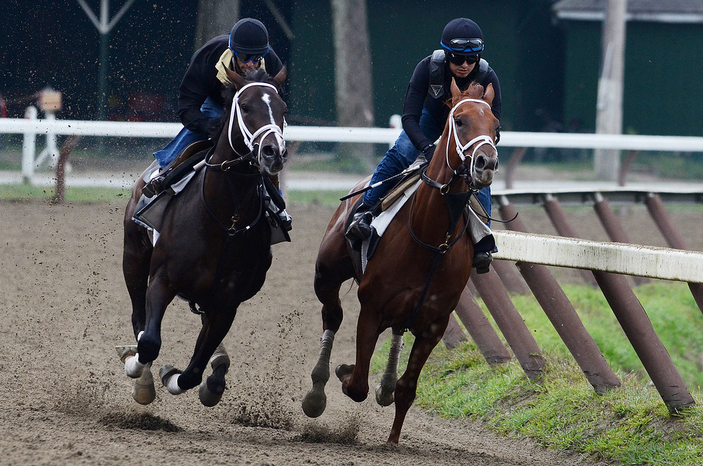 . Johnny Velazquez breezed Verrazano on Sunday morning, trained by Todd Pletcher, set to run in the Travers at the Saratoga Race Course.Photo Erica Miller 8/18/13 Verrazano3