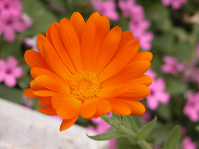 Flowers of Turkey