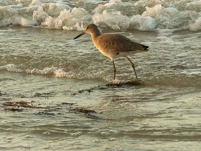 Ft Myers Beach FL shorebirds and pier