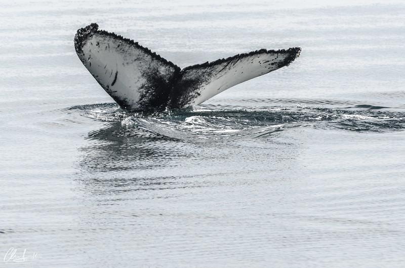 Iceland | Husavik Whale Watching