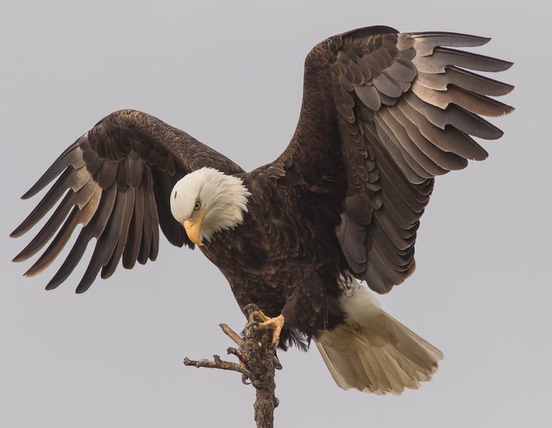 Eagle Display