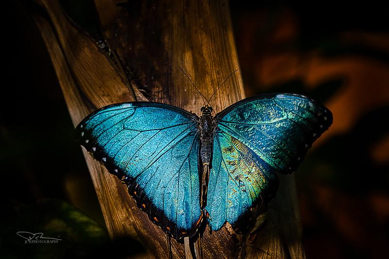 JM8_8972 blue S.jpg
