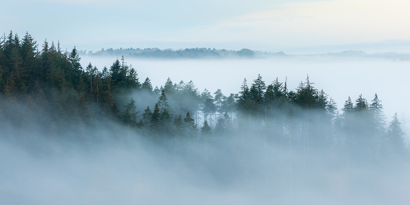 Fog Forest Landscape Woodland Photography Denmark Morning.jpg