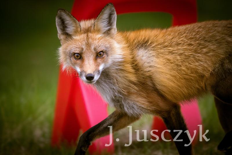Jusczyk2021-6227.jpg