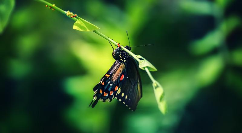 Butterflies-011.jpg