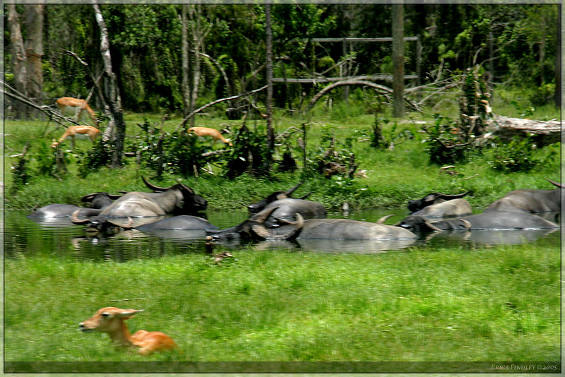 149_PalmBeach_LionCountry_July2005.jpg