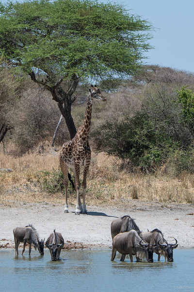 Tarangire National Park watering hole -9741.jpg
